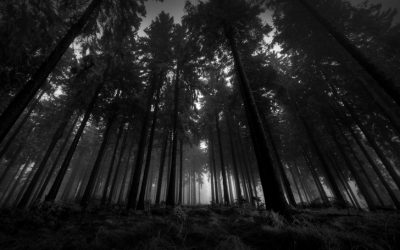 black and white landscapes nature trees forest 1920x1200 wallpaper_www.wallpapermay.com_47