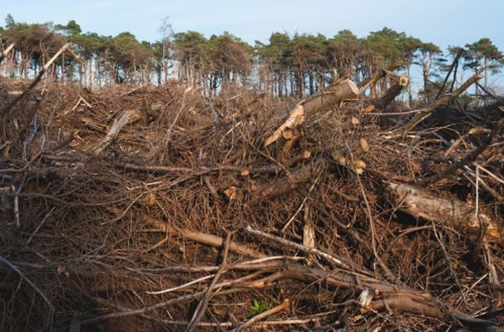 What is the impact of deforestation on the UK?