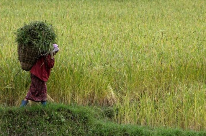 Indian state wins FAO award for becoming totally organic